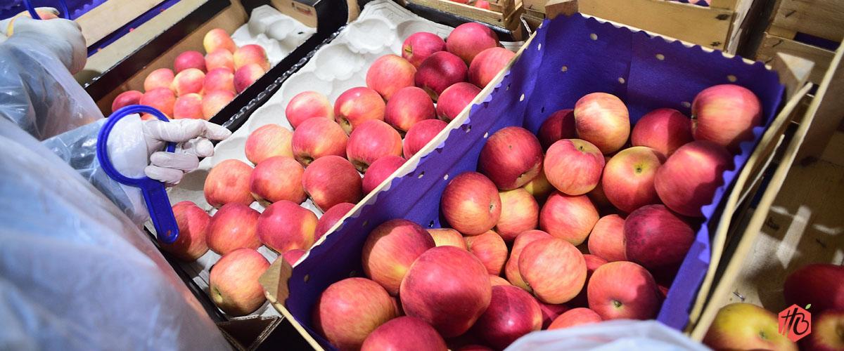 Otkup svežeg voća i povrća